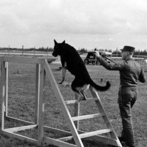 Sentry dog training