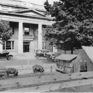 Swine demonstration by Swine Extension office during Farmers' Convention meeting in Pullen Hall, 1919.