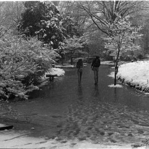 Winter view of students walking through M. E. Gardner Arboretum on North Carolina State University campus.