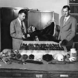 Zoology professors Frederick S. Barkalow and Reinard Harkema with fur coat and display of fur-bearing animals
