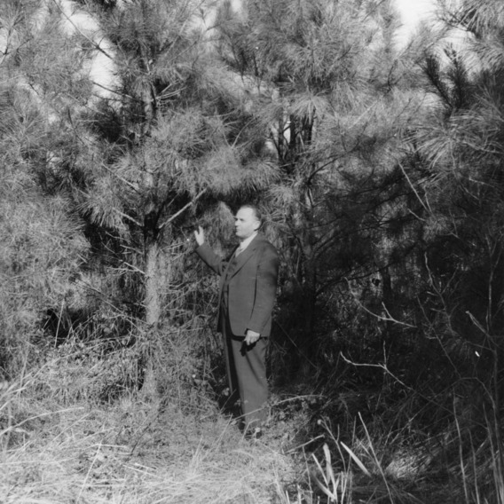 Julius V. Hofmann, founder of North Carolina Forestry Foundation and director of the Division of Forestry at North Carolina State College, standing in Hofmann Forest