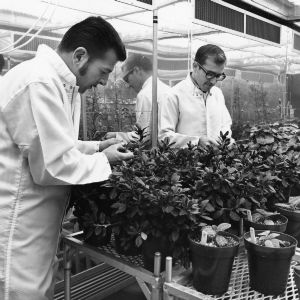 Phytotron, scholars working with plants