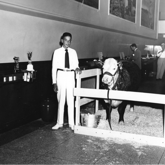 Charles Wilkerson in lobby of People's Bank, Roxboro [North Carolina], showing his second Grand Champion steer that weighed 910 pounds and brought 65 cents per pound.