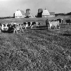 State College Dairy Farm