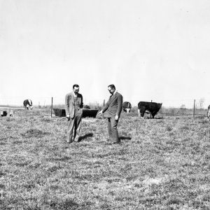 Dean W. Colvard and other man in field with cows