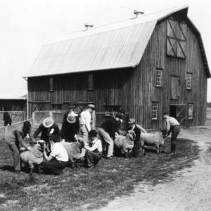 Students training in livestock judging