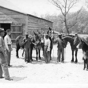 Two extension agents and boys holding horses, Workstock Project, Robert E. Cooley farm, Scotland County, April 1941.