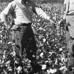 Two extension agents examing a plant in a cotton field