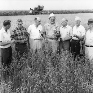 Group of agricultural administrators and educators in wheat field