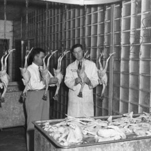"""The judges looking over a 1946 entry in the North Carolina """"Chicken of Tomorrow"""" contest."""