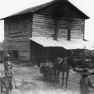 Tobacco curing barn showing horse-drawn cart of tobacco and women and children stringing tobacco