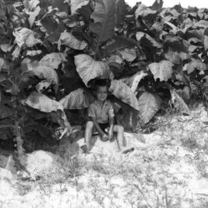 Young North Carolina farm boy sitting on the ground under a tobacco plant.