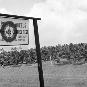 """View of sign for """"Research on wheels, tobacco disease control test"""" in foreground, tobacco field in background, July 1970."""