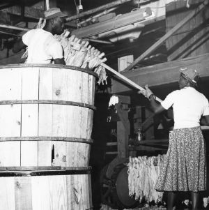 Tobacco redrying plant, Rocky Mount, North Carolina, October 25, 1955.