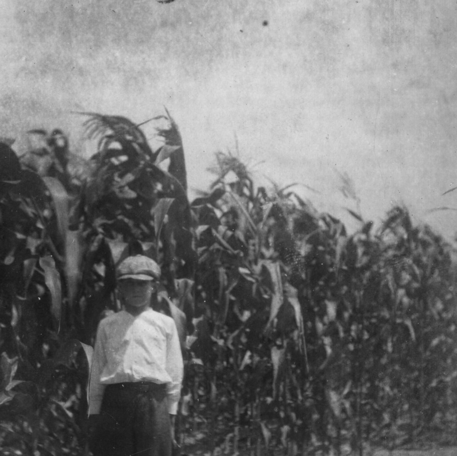 """This was taken the 8th of July, when my corn was in full growth, 1915."""