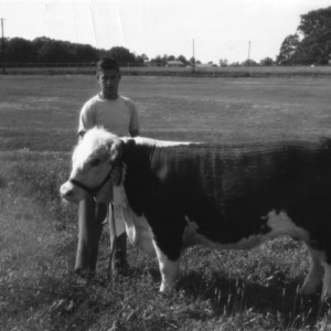 4-H club member holding his award-winning calf