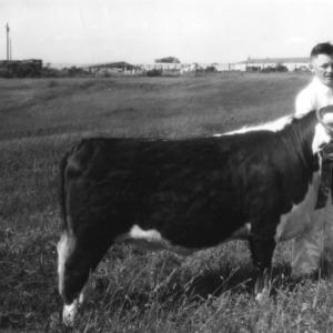 4-H club member holding an award-winning calf