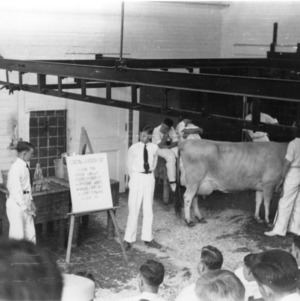 4-H club boys participating in a dairy demonstration