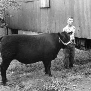 John [W?] Fuqua, Alamance County, North Carolina, with steer, 1945