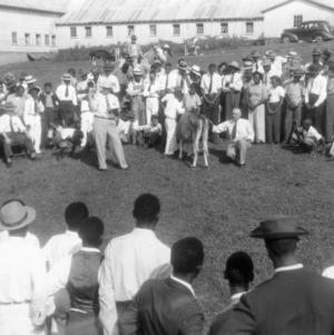 African American Junior Dairy Show