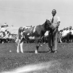 4-H club member showing a cow at African American Junior Dairy show