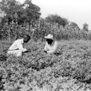 Wilson County - July 30, 1940. Levi Simmons and C. L. Spell[?] inspecting his acre of peanuts. Simmons was [?] the seven projects conducted this year. He has been in club work for five years.