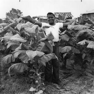4-H club member standing in a tobacco field in Fuquay Springs, North Carolina, in July of 1952