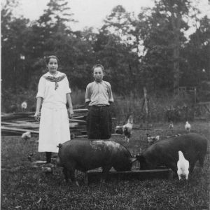Claud and Mary Tharrington of Arcola, North Carolina, standing with their pigs and chickens