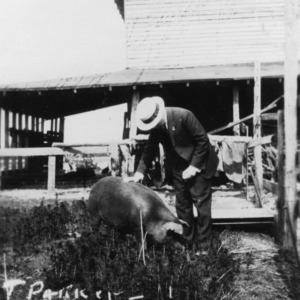 4-H pig club member petting his pig