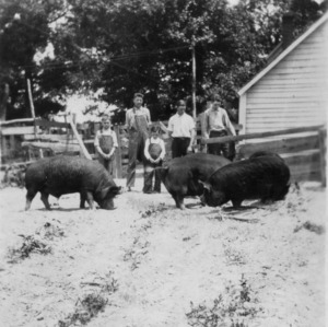 4-H pig club members standing with their pigs