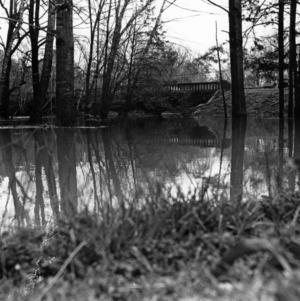 Crabtree Creek at Anderson Street