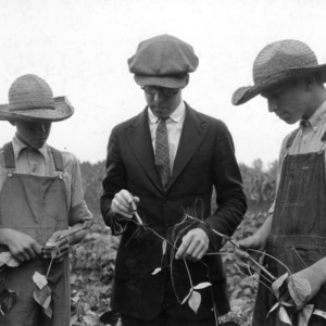 Club members Robert and Steven Sloop and leader examining nodules on mung beans in a soil improvement demonstration field, Rowan County, N.C., September 11, 1923.