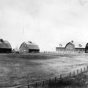 College barn buildings, located where Reynolds Coliseum currently stands