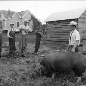 Elton Whitley, pig club member, demonstrating points of his pig, Stanly County, North Carolina, August 3, 1927.