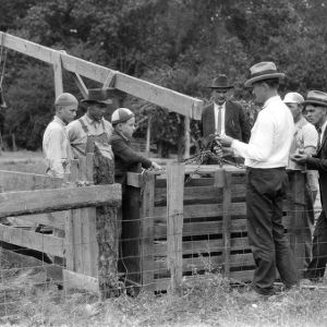 Weighing hogs in a feeding demonstration, Wayne County, North Carolina, September 23, 1924.