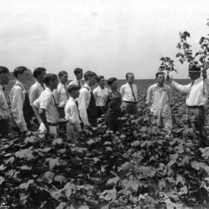 County agent demonstrating difference in cotton to club members, Stanley [i.e. Stanly] County, North Carolina, August 3, 1927.