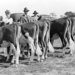 First prize winner for best 4-H County group of Guernseys at the 1935 State Fair