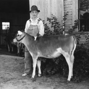 Wake County, Kenneth Myatt and the calf he won as an award for making the best record with an Arrowwood bred calf during 1937