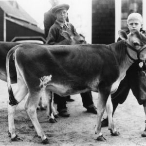 Caldwell County group of calves bought at the sale and distribution of club calves held in Statesville, April 21, 1934
