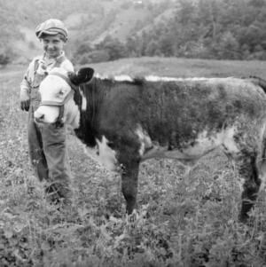 4-H club member holding his calf in Madison County, North Carolina, June 1935