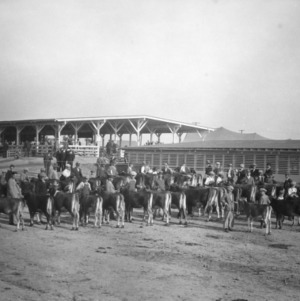 4-H club members attending the North Carolina State Fair in 1930 with their calves