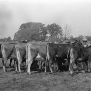 Blue ribbon winners in the Jersey 4-H Club classes at the N.C. State Fair 1930