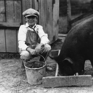 4-H club boy feeding pig