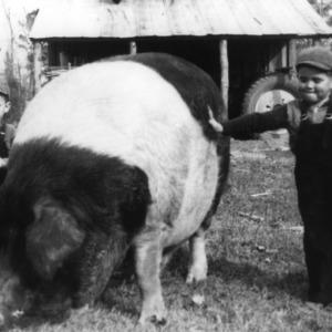 Dallas and David Proctor feeding pig