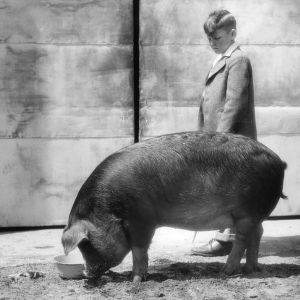 4-H club boy with pig at Kinston (Lenoir County), North Carolina stock show, 1946