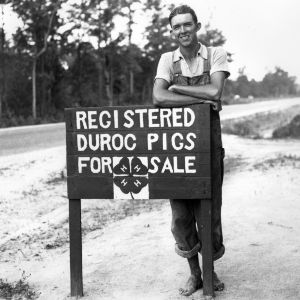 "4-H club boy next to sign reading ""Registered Duroc Pigs for Sale"""