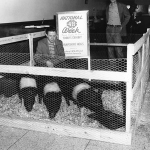 4-H club boy Richard Whitfield, of Bushy Fork (Person County), North Carolina, exhibiting Hampshire hogs during National 4-H Club Week