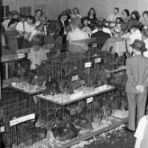 4-H Poultry Show and Sale, Winston-Salem, North Carolina, 1945