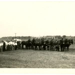 4-H club members examining mule team
