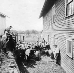 A group of boys observing a demonstration on [the] selection of [the] proper type of animals for the boys' Short Course at North Carolina State College in 1912